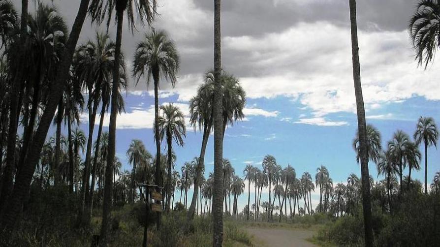 Parques Nacionales invita a disfrutar en el Litoral, las Yungas y Cuyo
