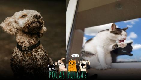 Higiene animal: ¿cada cuánto y cómo hay que bañar a perros y gatos?