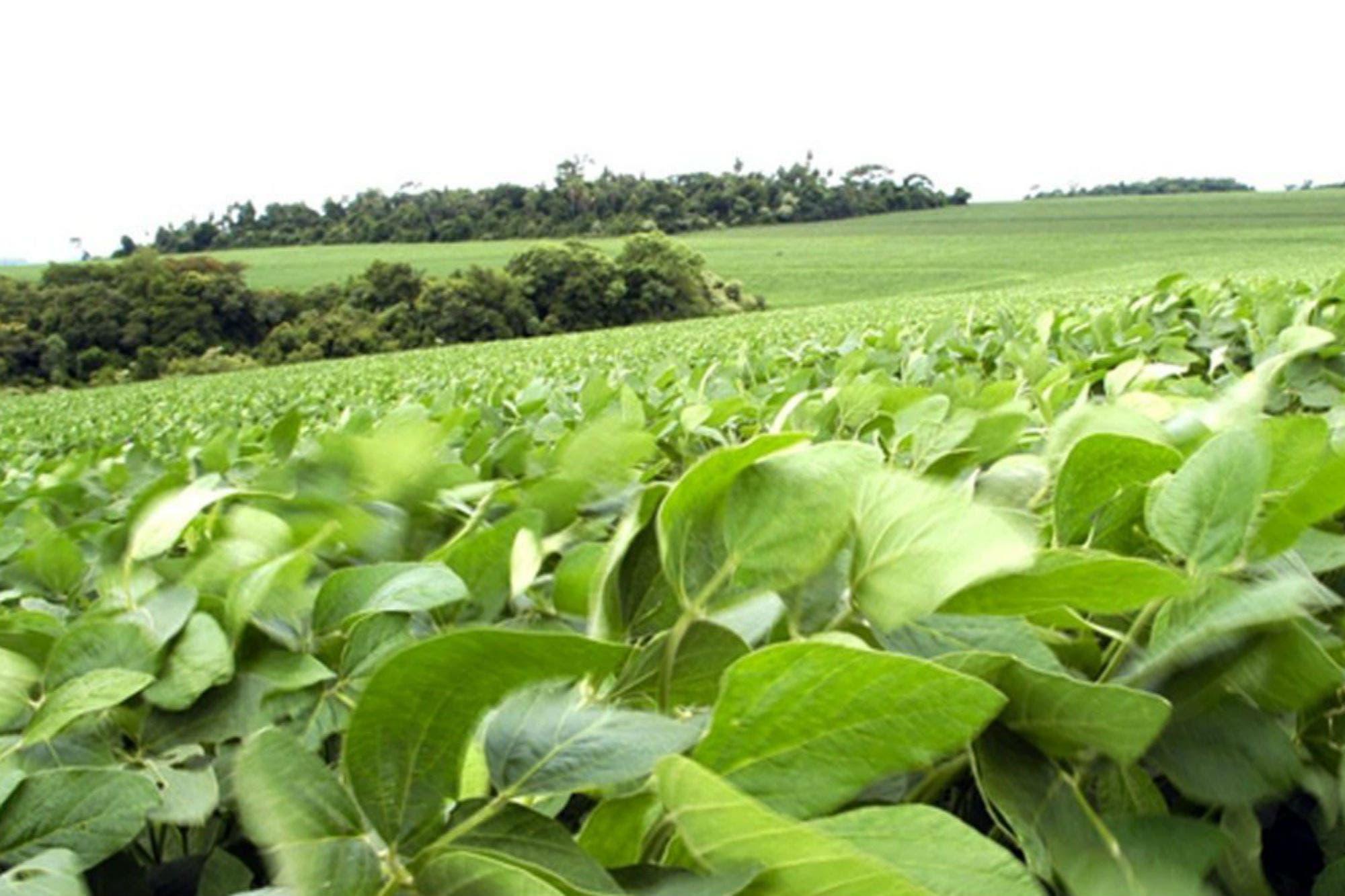 Según un informe, hoy se necesita un 41% más de soja para comprar una hectárea de campo